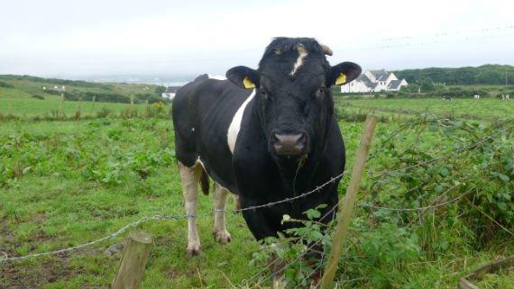 day tour cow